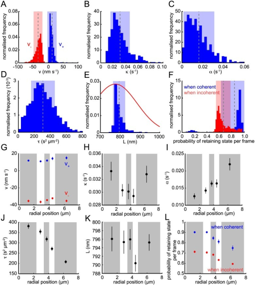 Population parameter analysis.Posterior means for (A) K-fibre (de)polymerisation velocities v+ (blue) and v− (red); (B) spring constant κ; (C) anti-poleward force gradient α; (D) noise parameter τ = s−2; (E) natural length L (blue); (F) the probabilities of not switching state per time-point when sisters are coherent (blue) and incoherent (red). The informed Gaussian prior on L is shown in red in (E). Dashed line and shaded areas in (A-F) indicate mean and ±s.d., respectively. (G-L) Trajectories binned by radial distance from the centre of metaphase plate (with approximately equal numbers per bin; alternating grey and white boxes) for parameters as in (A-F). Circles indicate mean of bin and lines show ±s.d.. All panels include all converged and filtered trajectories (n = 843).