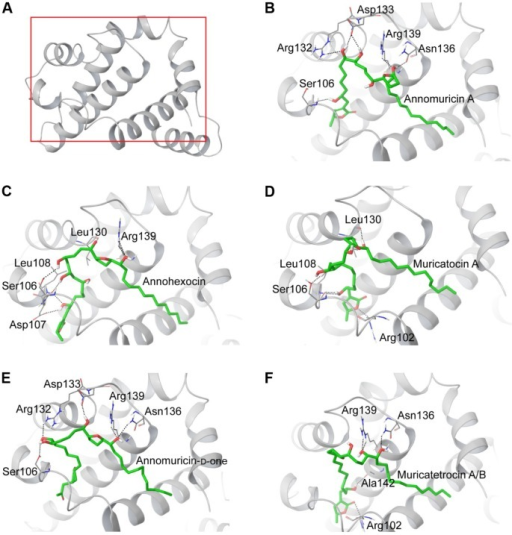Binding interactions of acetogenins in the active site of Bcl-Xl (3ZLR).Notes: (A) Bcl-Xl protein structure with the region shown in (B–F) boxed in red. Interaction of Bcl-Xl with (B) annomuricin A, (C) annohexocin, (D) muricatocin A, (E) annomuricn-D-one, and (F) muricatetrocin A/B.Abbreviation: Bcl-Xl, B-cell lymphoma extra-large.