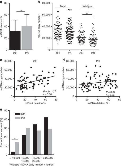 Impaired mtDNA maintenance in the dopaminergic substantia nigra of patients with PD.Data show analyses in single dopaminergic substantia nigra neurons from individuals with PD (n=84 neurons from 10 individuals) and age-matched controls (n=74 neurons from 10 individuals). (a) Deletion levels are significantly higher in PD compared with controls (P=0.004; Mann–Whitney U test). Error bars show s.d. (b) Scatter plot of total and wild-type (non-deleted) mtDNA. Total mtDNA copy number is similar in PD and controls, but the levels of wild-type mtDNA are significantly decreased in PD (P=0.006; Mann–Whitney U test). Bars show mean. (c,d) Linear regression of neuronal mtDNA copy number plotted against deletion levels; each point shows data from a single neuron. The correlation between mtDNA copy number and deletion is poor in PD (P=0.04, r=0.22) compared with controls (P=5 × 10−5, r=0.50; Pearson correlation). (e) Fraction of total dopaminergic substantia nigra neurons of individuals with PD and controls distributed according to wild-type (non-deleted) mtDNA content. The fraction of neurons with very low (<10,000) wild-type mtDNA copy number is significantly enriched in PD (Ctrl 2.7% versus PD 14.3%, P=0.01; Fisher's exact test), whereas in controls, the majority of neurons contain at least 15,000 copies of non-deleted mtDNA. Ctrl: controls. *P<0.05, **P<0.01.