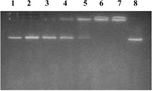 Ionic interaction analysis of mAb C and DNA. 0.3 μg of Sal I-linearized pSEAP-2 control DNA was mixed with water, medium or mAb C for 40 minutes at room temperature with occasional mixing and then subjected to 1% agarose gel electrophoresis. Lane 1: DNA in dH2O; lane 2 and 8: DNA in Modified Tyrode's medium without BSA (MTM); lane 3: DNA plus 0.1 μg mAb C in MTM; lane 4: DNA plus 0.3 μg mAb C in MTM; lane 5: DNA plus 1 μg mAb C in MTM; lane 6: DNA plus 3 μg mAb C in MTM; and lane 7: DNA plus 10 μg mAb C in MTM.