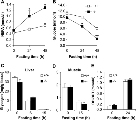 Effect of fasting on serum NEFA, glucose, and OH–BUT levels and liver and muscle glycogen content in wild-type and Decr−/− mice.Age-matched male wild type (open boxes/bars) and Decr−/− mice (solid boxes/bars) were fasted for 0, 24, and 48 h, after which the serum levels of non-esterified fatty acids (A) and glucose (B) were determined. Glycogen content of liver (C) and muscle (D) tissue from wild type (open bars) and Decr−/− mice (solid bars) in the fed state and after mice were fasted for 6 h and/or 15 h was analyzed using the phenol-sulfuric acid method. Serum β-hydroxybutyric acid levels were measured in the fed state and after 24 h of fasting (E). At each time point, the results are expressed as means±SE of 5–6 mice of each genotype per group. Significant differences in glucose and NEFA concentrations between wild type and Decr−/− mice are indicated by asterisks (* p<0.05, ** p<0.01).