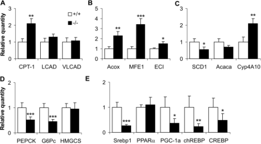 Effect of fasting on hepatic expression levels of genes for mitochondrial and extramitochondrial fatty acid metabolism.Quantitative real-time PCR analysis was used to determine changes in hepatic gene expression in Decr−/− mice (solid bars) after 24 h of dietary stress compared with wild type mice (open bars). (A) Relative expression levels of genes involved in mitochondrial β-oxidation; CPT-1, LCAD, and VLCAD. (B) Relative expression levels of genes involved in the peroxisomal β-oxidation pathway; Acox, MFE1 and ECI. (C) Relative expression levels of genes involved in fatty acid synthesis, desaturation and microsomal ω-oxidation; Acaca, SCD1 and Cyp4A10, respectively. (D) Relative expression levels of genes involved in the gluconeogenetic pathway and ketone body synthesis; PEPCK, G-6Pase and HMGCS, respectively. (E) Relative expression levels of genes encoding transcriptional factors; PPARα, Srebp1, chREBP, CREB, and the co-activator PGC-1α. For relative quantification of gene expression, the results were normalized using GAPDH as an endogenous control for each sample, and the data obtained for wild type samples were set to 1. Results represent means±SE of 5 mice of each genotype per group. Statistically significant differences in expression levels between wild type and Decr−/− mice are indicated by asterisks (* p<0.05, ** p<0.01, *** p<0.001).