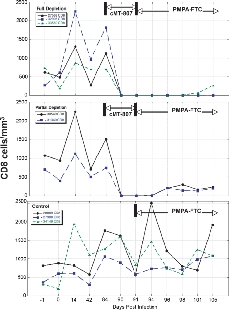CD8 T-cell concentrations before, following treatment with cMT-807 antibody and after starting PMPA/FTC.Results are displayed separately for full depletion, partial depletion and control animals. Time scales differ for each epoch shown and the x-axes are not to scale.