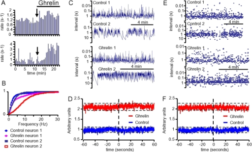 Ghrelin did not synchronize the activity of GHRH neurons in dual patch-clamp epxeriments.A, stimulatory effects of ghrelin (10 nM) on the firing rate of two GHRH neurons recorded simultaneously. Action potential rates were calculated every 30 s. B, cumulative distributions of the frequency of the action potentials of the GHRH neurons from panel A, showing the extent of the rightward shifts induced by ghrelin. C, intervals between action potentials of the GHRH neurons from panel A, under control conditions and in the presence of ghrelin, were then used in generating the cross-correlograms shown in D. The correlations of activity were calculated within consecutive bins of 100 ms during 60 s (see Methods for further details). Dotted lines indicate the 95% confidence boundaries within which the distributions behave as random, in the absence and presence of ghrelin. E&F, same as C&D, except that random distributions of instantaneous frequencies of action potentials were generated using the properties of the experimental data, in the absence and in the presence of ghrelin. The shapes of these cross-correlograms characterizing de-correlated series of events were almost undistinguishable from the experimental curves.