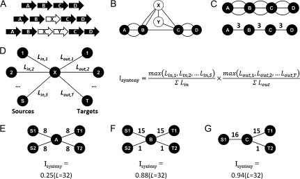 "Synteny representations and Isynteny calculations. (A) Traditional arrow gene representations, with ""core genes"" in black and inserted novel ORFs in white. (B) Conversion of (A) into network representation (used by Cytoscape), with each line representing an occurrence/link between the respective genes/ORFs. (C) Reduction of (B), with the removal of non-core genes, showing either all (top) or a condensation (bottom) of the number of links. (D) Formulation of the Index of Synteny (Isynteny) (equation on right), which reports the proportion of links (L) to the left (in) and right (out) of a gene X that are to single sources (S) and targets (T). (E–G) Various examples of gene synteny, along with the corresponding Isynteny values and the total number of links (under the format L = n)."