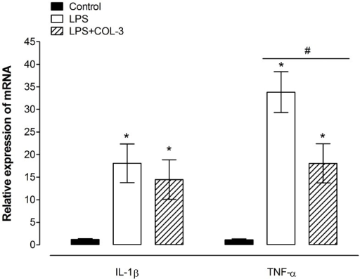 Effects of COL-3 on LPS-induced up-regulation of cytokine transcript levels in the brain.Relative expression of IL-1β and TNF-α mRNA in brains of control mice, LPS-inoculated vehicle-treated and LPS-inoculated COL-3-treated mice at 24 h post LPS inoculation. Each bar represents the mean ± S.E.M of the values obtained from 4 (for TNF-α) –12 (for IL-1β) animals. *P<0.05 compared to control animals and #P<0.05 compared to LPS-inoculated mice pretreated with vehicle.