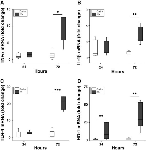 Hb metabolites and TNFα in CSF from rabbit pups following IVH. OxyHb (A), metHb (B), and TNFα (D) were quantified in intraventricular CSF at 24 (n = 6), 48 (n = 6), and 72 (n = 10) hours, as described in the Methods section, and the ratio of oxyHb/metHb was calculated (C). Horizontal lines depict median values. Median values of metHb and TNFα were increased at 72 hours as compared to corresponding values at 24 and 48 hours (P <0.01, Mann–Whitney U). The correlation between TNFα and metHb (E) at 72 hours was determined by linear regression analysis (r2 = 0.896, P <0.001). CSF, cerebrospinal fluid; Hb, hemoglobin; IVH, intraventricular hemorrhage; metHb, methemoglobin; oxyHb, oxyhemoglobin.