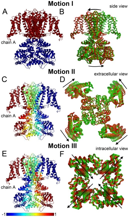 The three principal motions.The cross-correlations between the residues in each motion type are shown on the left panels (A, C, E); the channel is colored according to the correlation of the VSD of chain A with the other residues. The corresponding motions are presented on the right panels (B, D, F). Snapshots are colored according to the direction of motion, ranging from green to red. (A, C, E) In each panel, chain A represents an arbitrary CNGA3 chain (the channel comprises four identical chains). The magnitude of positive and negative correlations between the fluctuations of the residues is color-coded according to the blue-to-red scale at the bottom of the picture. Positive correlation indicates motion of two residues in the same direction, while negative correlation indicates motion in opposite directions. In panel A, the arrows indicate the location of the pivot points of the rotational motion at the termini of the S6 helices, i.e., the border between the dynamics units (See Discussion). The CNBDs in panel D and the TM domain in panel F are omitted for clarity.
