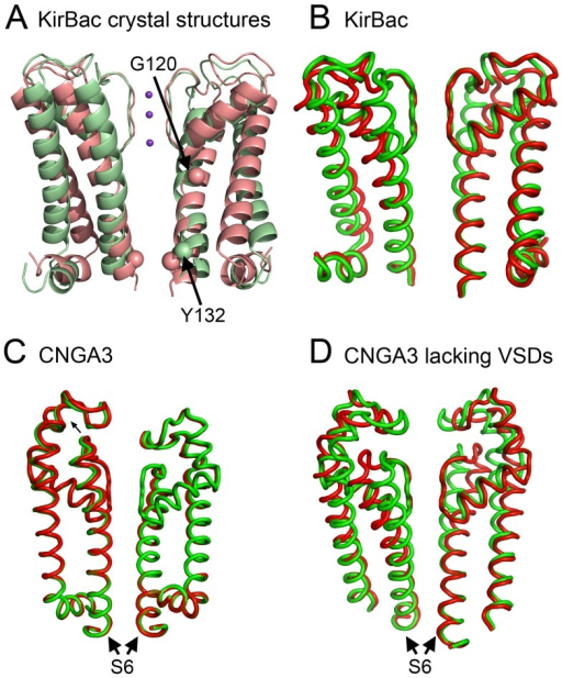 Motion I of CNGA3 appears to describe channel gating.For clarity, only helices S5 and S6 (or corresponding KirBac helices) of two juxtaposed subunits are shown in each panel. (A, B) The similarity between the predicted conformations in panel B and the crystal structures in panel A is apparent, verifying the relation between these conformations and channel gating. (A) Side view of the KirBac3.1 crystal structures in open (pale green, PDB entry 3ZRS [43]) and closed (pale red, PDB entry 2WLJ [44]) states. The α-carbons of the two gate-residues, namely G120 and Y132, are shown as a space-filling model. (B–D) The edge conformations of KirBac3.1 (B), CNGA3 (C) and CNGA3 lacking the VSDs (D), as predicted by the elastic network models in the slowest mode of motion. The two edge conformations are shown in red and green. (C) The CNGA3 conformations resemble the conformations predicted for the KirBac channel (panel B), but the pore region is rigid. (D) The CNGA3 without VSD conformations are identical to the KirBac conformations (panel B).