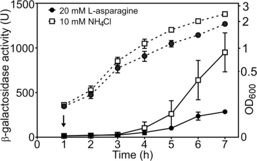 The cae8 promoter is sensitive to the amino acid L-asparagine.The figure shows measured β-galactosidase activities from wild-type BW25113 cells, carrying the cea8 promoter region subcloned into pRW50. Cells were grown in M9 minimal medium containing 0.5 mM NH4Cl until an OD600 of ~0.2, when the culture was split in to two and grown further in the presence of either 10 mM NH4Cl or 20 mM L-asparagine. The arrow indicates the time of addition of nalidixic acid and the dashed lines represent OD600. Each value is the average of duplicate experiments and the standard deviation is shown.