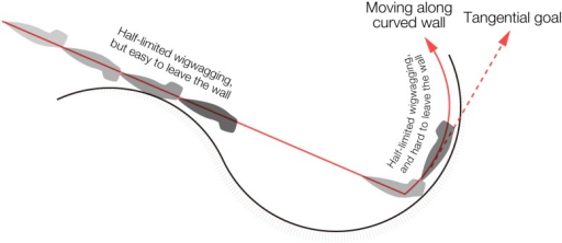Schematic illustration of planarian apparent wall preference.Planarians basically move straight ahead in an open field until reaching a wall. Planarians can easily leave the wall within a short time while moving along a convex curve because they can keep going straight ahead. In contrast, the possible direction of a planarian movement is limited for planarians moving around a concave curve of a wall. Planarians can leave a wall only when their wigwag angle is larger than the angle of curvature, and the frequency of this is stochastically low. If planarians display only a small angle of wigwag movements, they continue to move along the wall for a while, and then stop moving and stay motionless near the wall in the absence of environmental stimuli.
