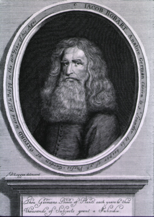 <p>Full face, slightly left, at age 80.  Inscription reads:  A native German chosen by ye founder to be keeper of ye physic garden at Oxford.  He died Feb. 4, 1679 in the 81st year of his age.</p>