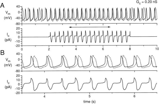 Simultaneous recording for 10 s of two isolated sinoatrial node cells, with the cells uncoupled during the first and last 2 s and coupled with a coupling conductance of 0.20 nS during the central 6 s. (A) Membrane potential (Vm) of cell A (solid line) and cell B (dotted line), and coupling current (Ic). (B) Data in A replotted for the time period indicated by the horizontal two headed arrow in A. Data from experiment 950803-2 (see Tables).