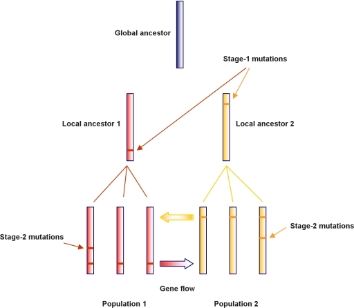 Graphical representation of the evolutionary model for a sample of two bacterial populations.Strain sequences are represented as vertical bars with horizontal lines indicating the mutations that have occurred since the global ancestor. Stage-1 mutations are defined as those that occurred on local ancestors which provide candidate sites for gene flow between the populations. Mutations that occurred after the local ancestors are referred to as stage-2 mutations.