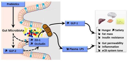 metabolic syndrome & diabetes ccpe pdf