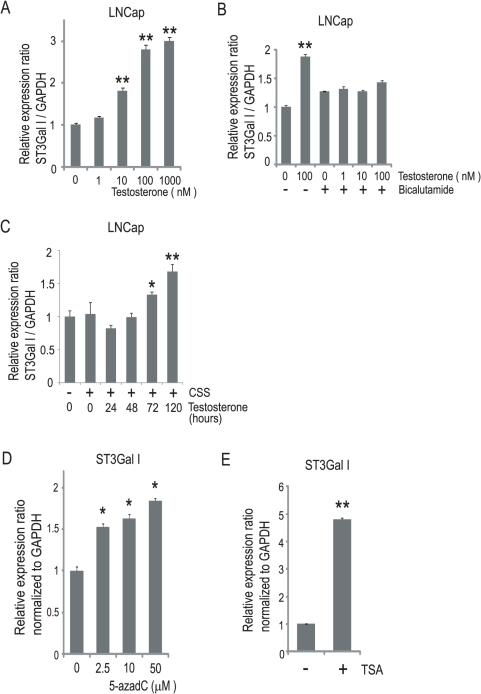 Androgen-dependent and epigenetic regulation of ST3Gal I in LNCap cells.(A) LNCap cells were treated with or without testosterone (0–1000 nM) for 120 h, by refeeding with fresh medium with or without testosterone at 72 h. The quantitative real-time PCR analyses for ST3Gal I were performed, and the expression levels are reported as the means ± S.E. (n = 3) of the fold difference in mRNA after normalizing the values to the expression level of untreated cells. **P<0.001. (B) LNCap cells were treated with or without testosterone (0–100 nM) and simultaneously with or without 10 µM bicalutamide for 120 h, by refeeding with fresh medium with or without testosterone and/or bicalutamide at 72 h. The quantitative real-time PCR analyses for ST3Gal I were performed, and the expression levels are reported as the means ± S.E. (n = 3) of the fold difference in mRNA after normalizing the values to the expression level of untreated cells. **P<0.001. (C) LNCap cells were incubated in charcoal-stripped serum (CSS) for 48 h and then treated with 100 nM testosterone for the indicated times. The quantitative real-time PCR analyses for ST3Gal I were performed, and the expression levels are reported as the means ± S.E. (n = 3) of the fold difference in mRNA after normalizing the values to the expression level of untreated cells. *P<0.05, **P<0.001. (D) LNCap cells were treated with 5-aza-2′-deoxycytidine (5-azadC) (0–50 µM) for 120 h, by refeeding with fresh medium with or without 5-azadC at 72 h. The quantitative real-time PCR analyses for ST3Gal I were performed, and the expression levels are reported as the means ± S.E. (n = 3) of the fold difference in mRNA after normalizing the values to the expression level of untreated cells. *P<0.05. (E) LNCap cells were treated with 5 µM trichostatin A (TSA) for 48 h. The quantitative real-time PCR analyses for ST3Gal I were performed, and the expression levels are reported as the means ± S.E. (n = 3) of the fold difference in mRNA after normalizing the values to the expression level of untreated cells. **P<0.001.