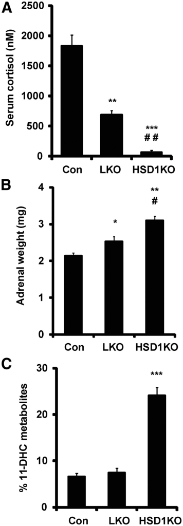 Assessment of in vivo 11β-HSD1 activity and adrenal function. A, Cortisone challenge. Control, LKO, and 11β-HSD1KO mice were gavaged with 200 μl suspension of cortisone acetate (0.5 mg) and serum collected by tail venesection after 20 min and cortisol generation quantified by GC/MS analysis. B, Adrenal weights in control, LKO, and 11β-HSD1KO mice (n = 9–10, 25–28 wk, *, P < 0.05; **, P < 0.01 vs. control; #, P < 0.05; ##, P < 0.01 vs. LKO). C, Analysis of urine by GC/MS in control, LKO, and 11β-HSD1KO mice showing the % of 11-DHC metabolites present (n = 6, 12–14 wk; ***, P < 0.001 vs. control). Con, Control.