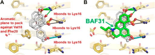 New BAFs derived from the refined amyloid pharmacophore.(A). Amyloid pharmacophore based on the structural overlay of active BAFs and derivatives. The overlay of the lead compounds from the initial round (BAF4, BAF8, and BAF11) elucidated the consensus of polar and nonpolar interactions at fiber binding interfaces, which sheds light on the amyloid pharmacophore. The amyloid pharmacophore was further refined by iterative approaches of computational docking and experimental testing. The derivatives of those lead compounds were tested to explore the essential role of those consensus interactions, and the differences of binding patterns and toxicity inhibition effects of the BAF derivatives can provide a guideline for the further refinement of amyloid pharmacophore. (B). New BAFs were 'designed' based on the refined pharmacophore. One successful example, BAF31 (green sticks) derived from the pharmacophore (grey sticks), showed the enhanced capability of inhibiting Aβ toxicity (Figure 8C). The success of developing enhanced binder from pre-defined pharmacophore highlights the important role of iterative docking/test approach in structure-based drug development.DOI:http://dx.doi.org/10.7554/eLife.00857.026