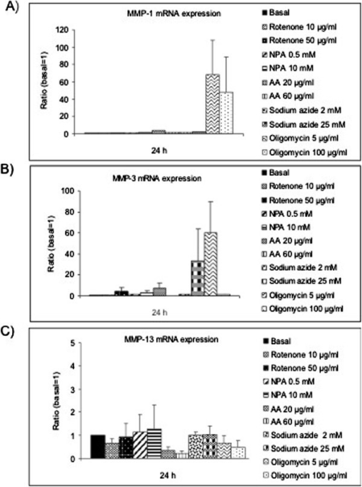mRNA expression of MMPs-1, -3 and -13 in chondrocytes after MRC dysfunction. Chondrocytes were cultured in 6 well plates in basal conditions or with Rotenone (10 and 50 μg/mL), NPA (0.5 and 10 mM), AA (20 and 60 μg/mL), Sodium azide (2 and 25 mM) or Oligomycin (5 and 100 μg/mL) for 24 h. The mRNA was purified and PCR was conducted in order to analyze MMP-1 (A), MMP-3 (B) and MMP-13 expression (C). Data are represented as mean ± SE of 9 independent experiments in duplo.