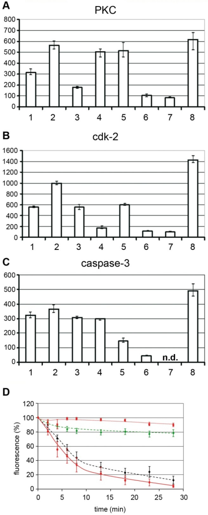 Cellular PKC and cdk-2 become activated by H1 and PKCα but not PKCβ is required for NEBD.A, B, C: Activation of PKC, cdk-2 and caspase-3 in permeabilized HeLa cells by H1. Y-axis: activity in arbitrary units. The tested activity is indicated on top of each panel. The columns show the mean values of three independent experiments. The variation bars show the range between the highest and the lowest value. 1. permeabilized cells. 2. permeabilized cells+H1. 3. permeabilized cells+H1+H89. 4. permeabilized cells+H1+Roscovitine. 5. permeabilized cells+H1+zVAD-fmk. 6. H1 without cells. 7. permeabilized cells+H1+thapsigargin. 8. non-permeabilized cells. n.d. not determined. The panels show that permeabilization decrease the activity of all three enzymes and that H1 activates the activities of PKC and cdk-2, while an effect on caspase-3 is doubtful. Inhibition of PKC also reduced activity of cdk2 but not of caspase_3 despite of its inhibitor specificity shown in the supporting information. Thapsigargin pre-treatment, leading to Ca++ depletion inhibits PKC and cdk2 implying that a Ca++-dependent PKC is involved. D. PV H1-mediated NEBD is inhibited by PKCα but not PKCβ. Quantification of PI-stained chromatin of permeabilized HeLa cells to which 300 H1 per permeabilized cell were added. The bars depict 95% CI. Red, dotted line: buffer (n = 28); red line: H1 (n = 14); green dashed line: H1 using PKCα-inhibited cells (n = 19); black dashed line: H1 using PKCβ-inhibited cells. Collectively, the data show that Ca++-dependent PKCα is required for NEBD, which is consistent with the PV-mediated activation of a Ca++-dependent PKC. PKCα subsequently activated cdk-2, which was also shown essential for NEBD. Caspase-3 was not significantly activated by PV but its activity was however essential for NEBD.