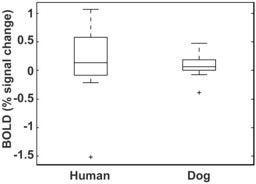 "Comparison of caudate response in humans and dogs.The human data is from an instrumental conditioning task. The caudate response is to a visual cue indicating the imminent receipt of fruit juice, to which participants had to press a button to receive the juice [17]. The canine data is in response to the hand signal indicating ""reward."" For comparison to each other, both dog and human activations are referenced to an implicit baseline."