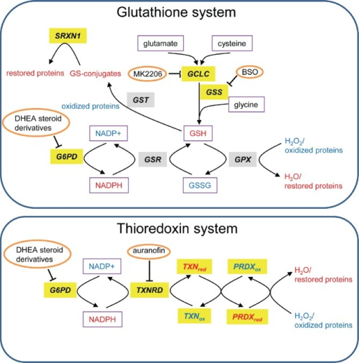 Glutathione and TXN systemsGenes that are highly expressed in tumors versus normal tissues are highlighted in gray and those associated with bad prognosis in lung or breast cancer are highlighted in yellow. The redox state of proteins and metabolites is depicted in color (red=reduced and blue=oxidized). Metabolites are boxed and inhibitors are circled. This scheme is adapted from [137].