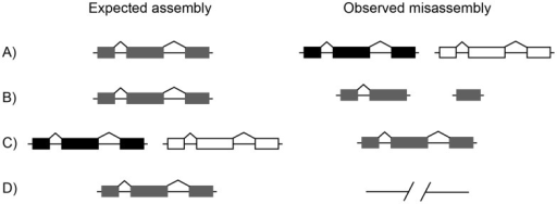 "Examples of missassembly leading to misannotation.Each row shows the true state of the genome on the left (""Expected assembly"") and a common misassembly error on the right (""Observed misassembly""). A) A single gene may be assembled as two apparently paralogous loci, increasing the predicted gene count. B) A singe gene may be fragmented into multiple pieces, each on different contigs or scaffolds. This cleavage can increase the number of predicted genes. C) Two paralogous genes may be collapsed into a single gene, decreasing the predicted gene count. D) A gene may be partially or entirely missing from the assembly, decreasing the number of predicted genes."