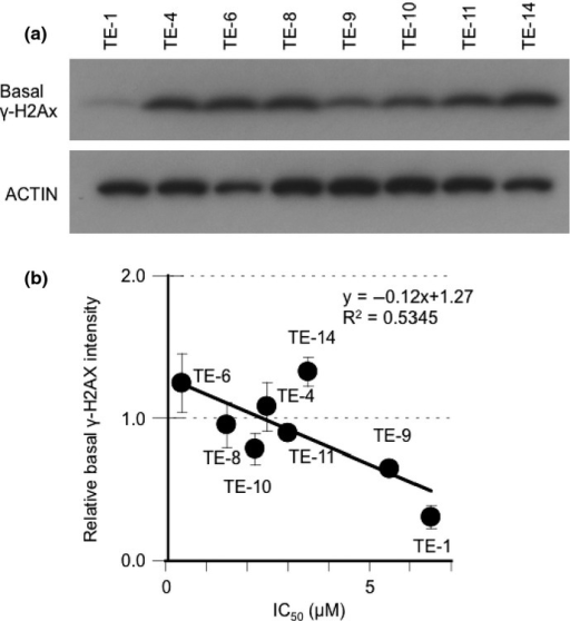 A strong correlation between base-level γ-H2AX and sensitivity to AZD2281 of TE cells. (a) Eight non-treated TE-series cell lines were subjected to Western blot analysis with antibodies against γ-H2AX and actin. (b) The correlation between basal γ-H2AX expression levels and IC50 of AZD2281. The average intensity of γ-H2AX was standardized with actin. The data represent the averages and standard deviations of three independent experiments.