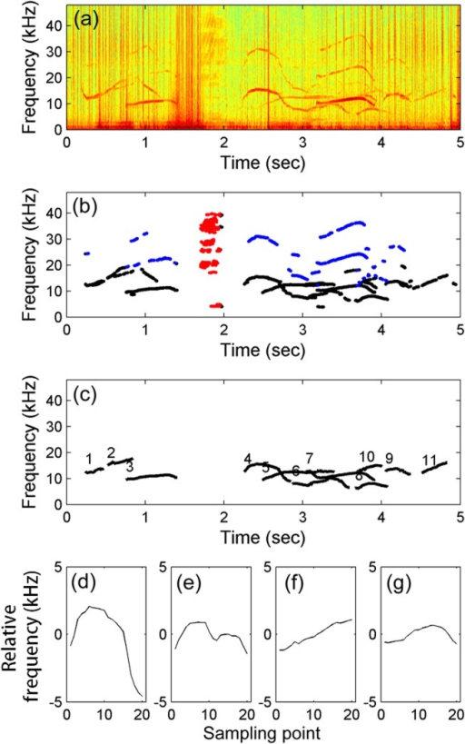 Example of automatic tonal sound detection and unsupervised classification.(a) Spectrograms produced from MACHO recording using fast Fourier transform with a Hamming window. (b) Burst pulses (red dots), harmonics (blue dots), and representative frequencies (black dots) obtained by the local-max detector. (c) Whistle contours were extracted using the pitch-tracking algorithm; different contours were labeled with different numbers. (d–g) The four whistle types were classified using the unsupervised method.