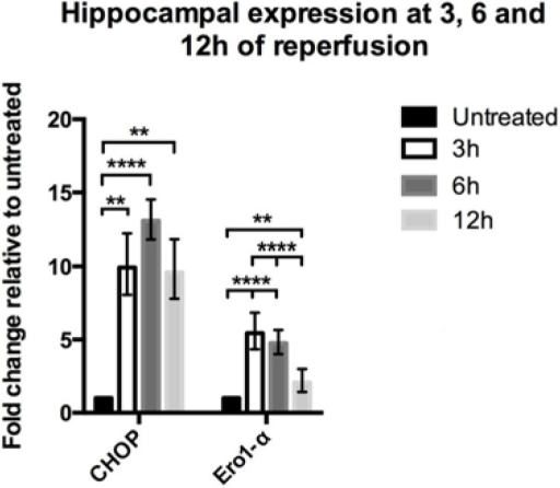 Hippocampal expression of CHOP and Ero1-α following global ischemia. Quantitative PCR revealed a significant increase in expression of CHOP and Ero1-α induced by global ischemia over a time course of 12 h. The greatest expression level of CHOP is detected at 6 h of reperfusion (n = 6) compared to untreated animals (n = 10), (p < 0.0001). At 3 h (n = 7) and 12 h (n = 6) after induction of ischemia similar expression levels of CHOP were observed, significantly greater than in the untreated group (p < 0.01). No difference between the different time points was detected. Ero1-α was significantly increased at 3 h (n = 5), 6 h (n = 7) and 12 h (n = 5) of reperfusion (p < 0.0001 and 0.01 respectively), with greatest expression levels at 3 to 6 h followed by a decrease. Data analyzed by one-way ANOVA followed by Tukey's multiple comparisons test. ** p < 0.01 and **** p < 0.0001.