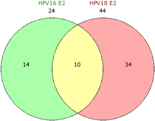 The Venn Diagram Of Modulated Genes In Hpv16 And 18 E2 Open I