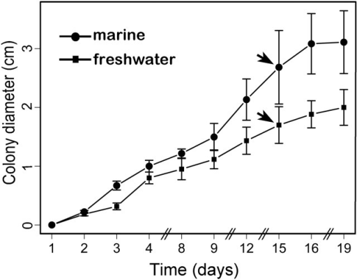 Graphical representation of C. maritima growth under two salinity conditions (bars represent SD). The growth in freshwater is represented by filled squares, whereas the marine growth is represented as the solid circles. Statistical significance between the curves was assessed using a permutation test to compare growth curves. The test was applied to the colony diameter until effects on the growth were most apparent, that is, 16–19 d after inoculation. The pair-wise comparisons between the fungi samples were statistically nonsignificant (P-value 0.0999). The arrows indicate the time of growth from where the RNA isolation was performed for either the transcriptome or the RT-qPCR analysis.