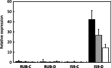 Expression of nsLTP genes. Expression of CaLTP1-CaLTP2 (CaCe: white isobars), CaLTP3 (CaCc: grey isobars) and all (CaLTP1, CaLTP2 and CaLTP3: black isobars) genes was analysed by qPCR in plagiotropic buds of Rubi (RUB) and IAPAR59 (I59) cultivars of C. arabica grown under control (C) and drought (D) conditions, using the LTP-FT/LTP-R2, LTP-FT/LTP-R1 and LTP-F100/LTP-R100 primer pairs, respectively [37]. Expression levels are expressed in arbitrary units (AU) of nsLTP genes using the expression of the CaUBQ10 gene as the endogenous control and RUB-C (with LTP100 primers) as the reference sample (Relative expression = 1). Values of three technical replications are presented as mean ± SD (bar)
