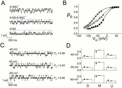Fast-gating properties of heterodimers after MTSEA modification. (A) Single-channel recording traces of K165C*, K165-K165C*, and K165 channels. Membrane potential, −40 mV. Dotted lines are zero-current level. (B) Po-V curves derived from single-channel recordings (n = 3–7). Solid curves are Boltzmann curves for K165 (○) and K165C* (•) channels, while the dashed curve is simply the average of the two solid curves. (□) The measured Po of the heterodimers (average of K165-K165C* and K165C*-K165). (C) Single-channel recordings of the heterodimer K165C*-K165 at three different voltages. Open probabilities shown on the right were calculated from >40-s continuous recordings, including the three traces shown at left. (D) Comparison of the measured state probabilities (bars) with the expected state probabilities (circles). (•) Calculated from the averaged Po of the heterodimer according to  (binomial distribution). (○) Calculated according to , assuming distinct Po's for two pores (multinomial distribution). The open probabilities were taken from the Po's of the homodimers at the corresponding voltages shown in B. Statistical analysis showed significant difference (P < 0.01, one sample t test, SPSS 8.0; SPSS, Inc.) between the measured probabilities of the M level and the expected values derived from the binomial model in all three voltages. The comparisons of the measured probabilities with the expected values from the multinomial model, however, showed no difference (P > 0.01).