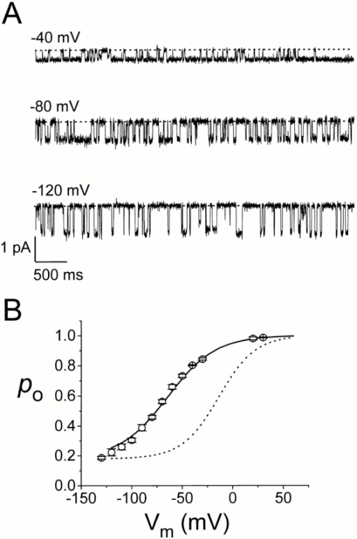 Fast gating of the heterodimer without MTSEA modification. (A) Single-channel recording traces of the heterodimer K165C-K165 at different voltages. Dotted lines represent zero-current level. (B) Steady state Po-V curve of the single-pore heterodimer. (○) The average of three to eight measurements from traces like those shown in A. Solid and dotted curves are the same Boltzmann curves for the K165 and K165C* homodimers, respectively, as those shown in Fig. 6 B.