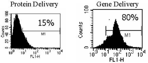 Flow cytometric characterization. Shown are the results of FACS analysis for the antigen delivery. Note that the use of AAV/GFP/IE1 loading DC resulted in a higher delivery effect (80%) than IE1 protein lipofected DC did (15%).