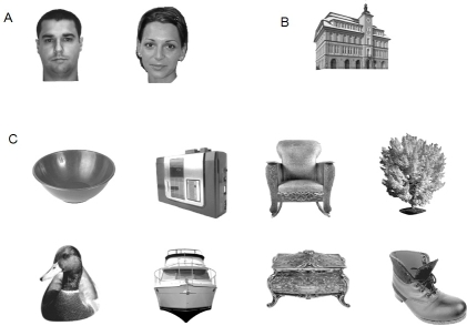 Examples of stimuli used in the different experiments for each semantic							category. A: Male and female faces. B: Buildings. C: Various objects:							kitchenware, high-tech, furniture, animals, vehicles, clothing, plants,							and decorative objects.