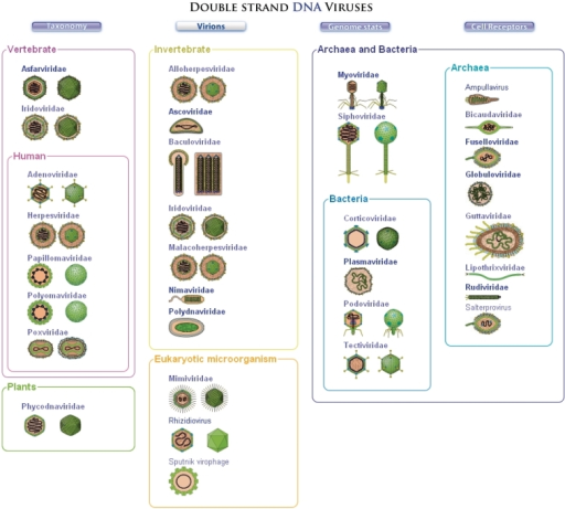A description of a genome as the complete collection of an organisms genetic material