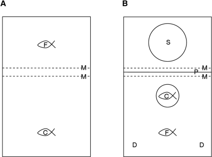Experimental test tank schematic: arrangement of fish and apparatus during and between trials.Plan view of test tank before and between trials (A) and during trials (B): focal fish (F), companion fish (C) contained in transparent plastic cylinder during trials, two areas where live Daphnia sp. were delivered during trials (D), speaker (S) behind opaque partition (P) during trials, mesh partitions (M) separated fish between trials. Fish in separate sections of the tank between trials with mesh partitions allowing visual, acoustic and olfactory contact.