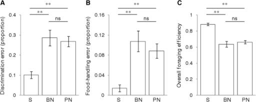 Acoustic noise increases foraging performance errors and reduces foraging efficiency.Response of foraging sticklebacks to playbacks of silence (S), brief (10 s) white noise (BN) and prolonged (300 s) white noise (PN). Bars show mean±1s.e.m. response for 24 fish during each playback of a repeated-measures experiment, with significant (**p≤0.01) and non-significant (ns p≥0.05) posthoc differences indicated (paired t-tests with Bonferroni correction). Brief noise and prolonged noise both significantly affected (A) the proportion of attacks towards non-food items, (B) the proportion of attacked food items that were not consumed, and (C) overall foraging efficiency (consumed items as proportion of all attacks on food and non-food items).
