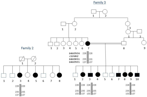 Haplotypes of families 2 and 3 using D4S2924, D4S3051, and D4S2921 STR markers. Alleles are given in bp.