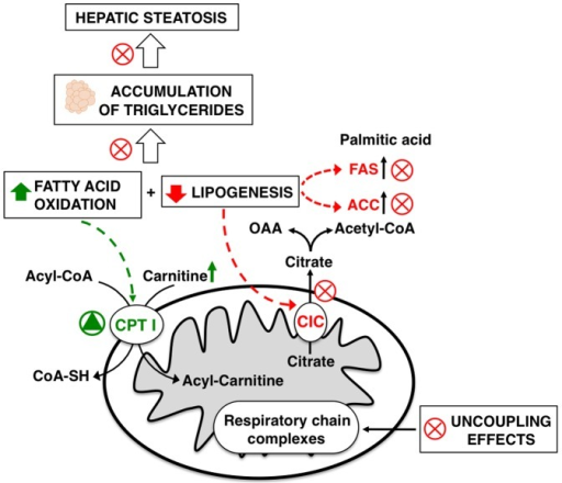Liver metabolic pathways influenced by the addition of KO to a HF diet.A red X symbolizes inhibition; a green triangle symbolizes stimulation. OAA, oxaloacetate.