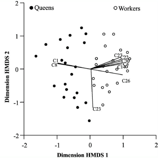 Analysis of division of labor between queen and worker castes by means of ordination by hybrid multidimensional scaling, in two dimensions (stress = 0.25), of the nests of Mischocyttarus consimilis (21 records for queens, filled circles; 21 records for workers, empty circles) according to the 30 defined behavioral acts. The vectors represent the behavioral acts that contributed most to the ordination (r > 0.5). Cl = physical dominance, C8 = food solicitation characterized the repertory of queens, C4 = adult—adult trophallaxis, C14 = destruction of cells, C22 = alarm, C26 = foraging for prey, C27 = foraging for nectar, C30 = unsuccessful foraging characterized the workers' repertory, C23 = immobility was common to both castes. High quality figures are available online.