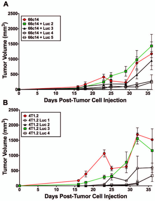 Tumor growth of 66c14 luc and 4 T1.2 luc cells injected orthotopically into Balb/c mice. 66c14 luc and 4 T1.2 luc cell lines were injected into the mammary fat pad of Balb/c mice and tumor volume was measured over 36 days. (A) 66c14 luc2 tumor growth (green/square) was most consistent with parental 66c14Tumor growth (red/circle) and (B) 4 T1.2 luc3 tumor growth (green/square) was most consistent with parental 4 T1.2 (red/circle) tumor growth. Data is expressed as tumor volume (mm3) (mean ± std dev; n = 3).