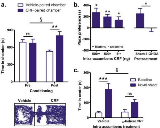 CRF in the nucleus accumbens promotes appetitive behaviora, Mean (+ s.e.m.) mean times spent in CRF-paired chamber than the vehicle paired chambers before and after conditioning, n = 7 (top) and representative post-conditioning activity trace (bottom). b, Place preference (time in CRF-paired chamber – time in vehicle paired chamber post conditioning) for intra-nucleus accumbens injections of 500 ng CRF bilateral, 500 ng unilateral or 5 ng bilateral, n = 7-10 (left). Place preference for 500 ng CRF (unilateral) in sham or 6-OHDA treated mice, n = 10 (right). c, Time spent in the center of an open field before and during presentation of a novel object (placed in center of field) following bilateral intra-accumbens infusion of the CRF-receptor antagonist α-helical CRF (500 ng) or its vehicle, n = 10. Data on bar graphs are mean + s.e.m.; ns p > 0.05, * p < 0.05, ** p < 0.01, *** p < 0.001; § p < 0.05 for interaction.