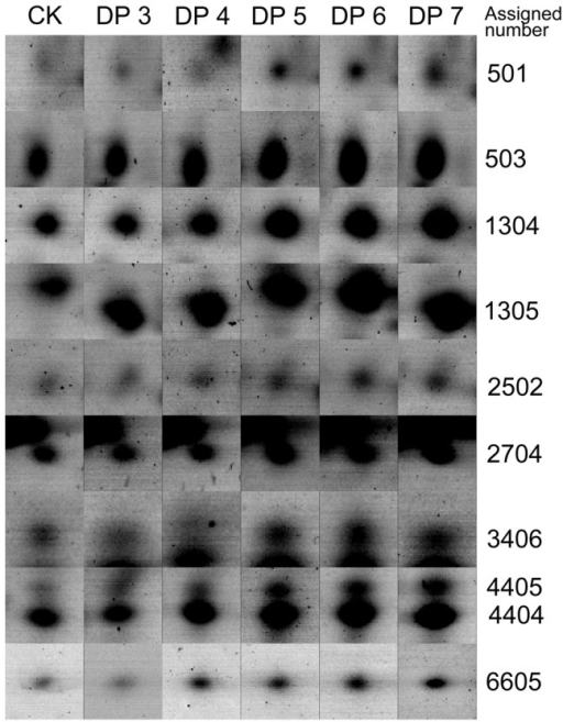 Comparison of protein spots from the elicitor-treated sets with the elicitor-free control.Proteins were extracted from the leaf cells at 12-free sample (blank control). DP, degree of polymerization.
