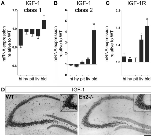 Expression of IGF-1 and IGF-1R mRNAs in the neuroendocrine axis of WT and En2−/− mice. (A,B) Quantitative RT-PCR for IGF-1 class 1 (A) and class 2 (B) transcripts. (C) IGF-1R quantitative RT-PCR. Values are plotted as each gene/L41 comparative quantitation ratios normalized on the expression of WT (mean ± SEM of three replicates from pools of six animals per genotype; *p < 0.05, **p < 0.01; ***p < 0.001; Student's t-test, En2−/− vs. WT). (D) Representative pictures of in situ hybridization for IGF-1 mRNA (both transcripts) on the dorsal hippocampus from WT and En2−/− mice. Insets show the CA3 subfield. Scale bar: 200 μm (whole hippocampi) and 125 μm (insets). Abbreviations are as in Figure 1.