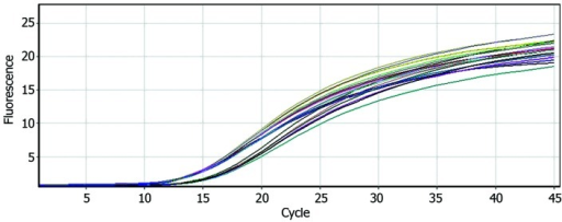 Amplification curve of cDNA from HepG2, Huh7, SMMC7721, Bel-7402 and HL-7702 cells (23 copies demonstrating reliability).