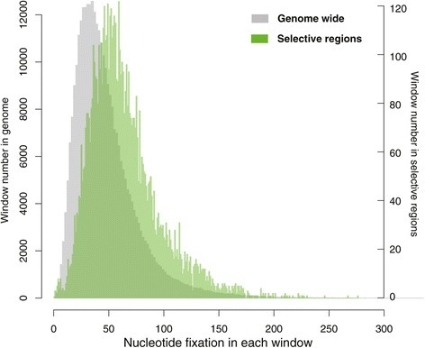 The distribution of nucleotide fixation over the genome versus in the selective regions. The window size was set to be 20 kb.