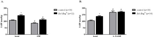 Pressure responses to agonists or antagonists of the NO-cGMP-system in Sol-Eng+ and control mice.Maximal hypotensive effect of sodium nitroprusside (SNP; 2 mg/Kg b.w.) in Sol-Eng+ and control mice (A). Maximal hypertensive effect of L-NAME (50 mg/Kg b.w.) in Sol-Eng+ and control mice (B). Effects were measured by telemetry. SABP: Systolic blood arterial pressure. Data are shown as mean ± S.E.M. ANOVA and unpaired t-test with respect to control, *p≤0.05; ANOVA and paired t-test with respect to basal conditions, #p≤0.05.